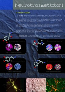 Neurotrasmettitori ammine