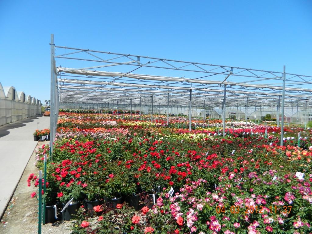 Fullsize Of Mesquite Valley Growers