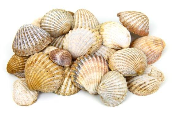 Morskie muszle