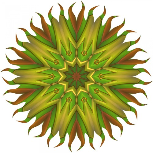 Medium Of Sun Star Plant