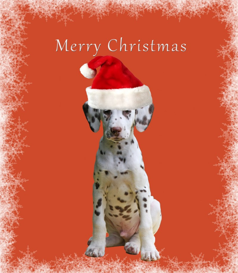 Large Of Dog Christmas Cards