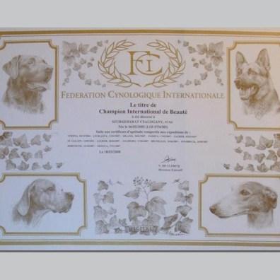 Pumi certificato_pimpy_8