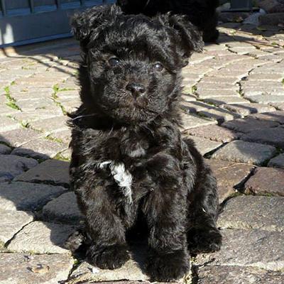donatello-cucciolo