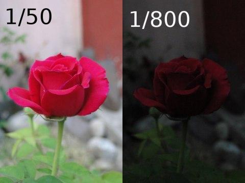 Rosa - Velocidad de obturación