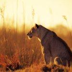 Sunset Stalking