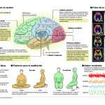 Efectos de la meditación en el cerebro [Infografía]