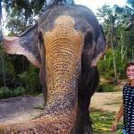 """Elefante le roba la GoPro y se saca una épica """"elfie"""""""
