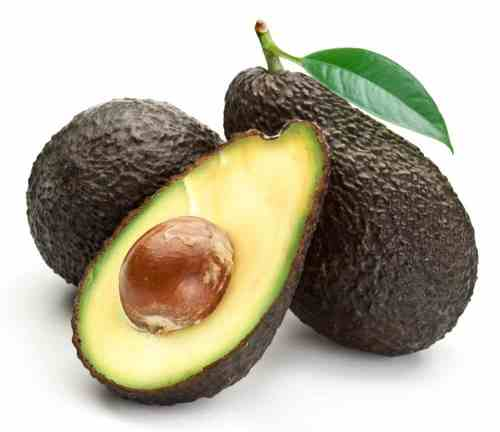 Medium Of Is Avocado Good For Dogs