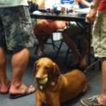 Calypso Photo Dog