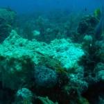 sponge_disease 1