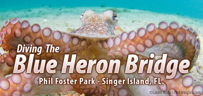 Blue Heron Bridge - Phil Foster Park