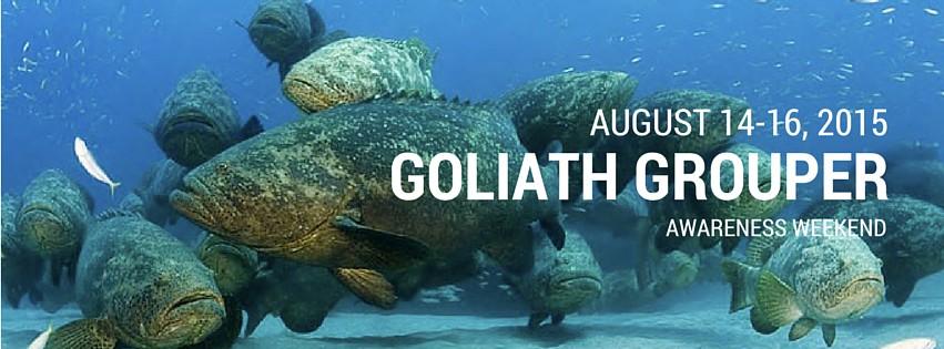 Goliath Grouper Awareness Weekend