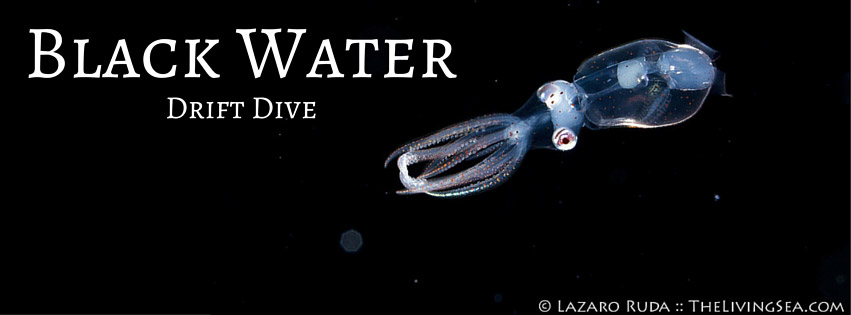 Black-Water-Drift-Dive-2