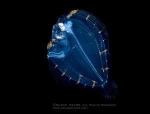 Blackwater-SusanMears-EyedFlounder