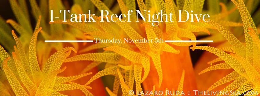 1-Tank Reef Night Dive