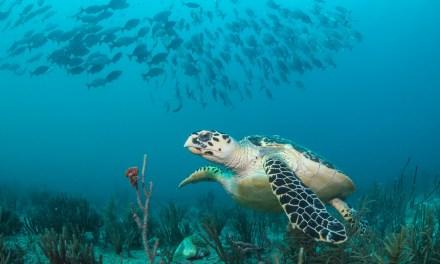 3pm 2-Tank Dive Aboard Sirena