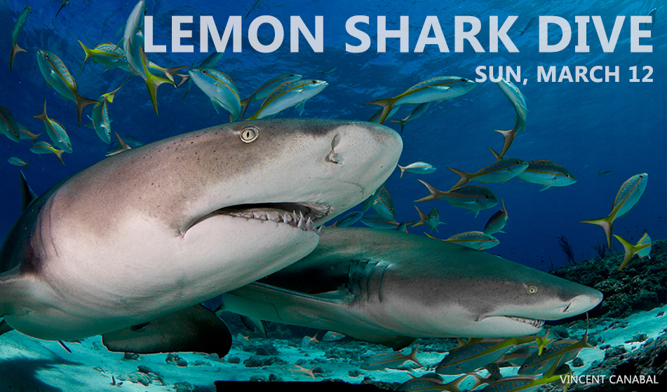 FEBRUARY SHARK DIVES