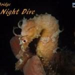 MAR 25: NIGHT DIVE AT BLUE HERON BRIDGE