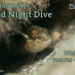 JUNE 7 NIGHT DIVE AT BLUE HERON BRIDGE