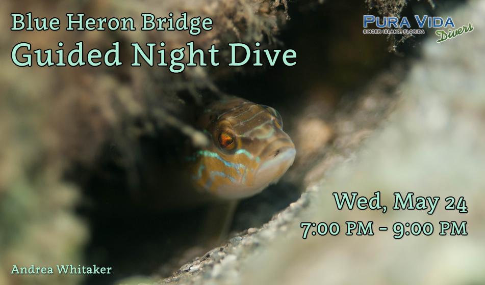 MAY 24: NIGHT DIVE AT BLUE HERON BRIDGE