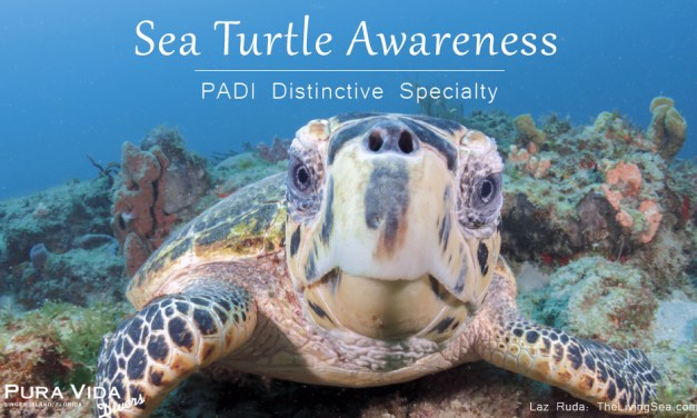 SEA TURTLE AWARENESS CLASS