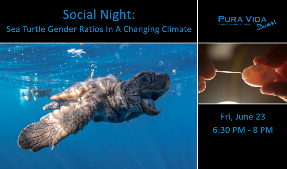 JUNE 23: SOCIAL NIGHT – HATCHLING SEA TURTLE GENDER RATIOS