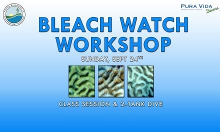 BLEACH WATCH WORKSHOP & DIVE