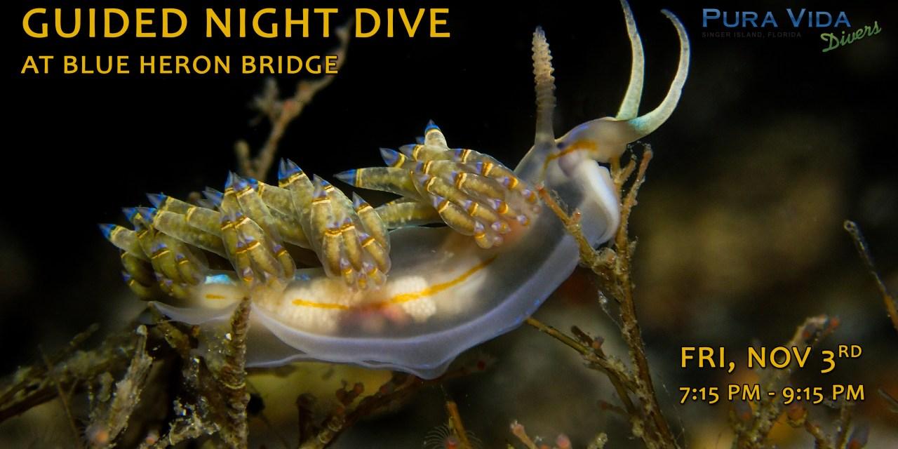 NOV 3: GUIDED NIGHT DIVE AT BLUE HERON BRIDGE
