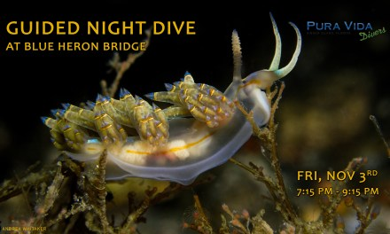 NOV 3: GUIDED NIGHT DIVE AT BLUE HERON BRIDGE