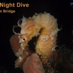 JAN 16: GUIDED NIGHT DIVE AT BLUE HERON BRIDGE
