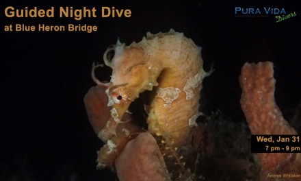 JAN 31: GUIDED NIGHT DIVE AT BLUE HERON BRIDGE