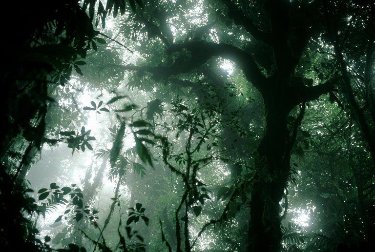 Monteverde Costa Rica. Foto Stuart Franklin:Magnum Photos nytimes.comnytimes.com