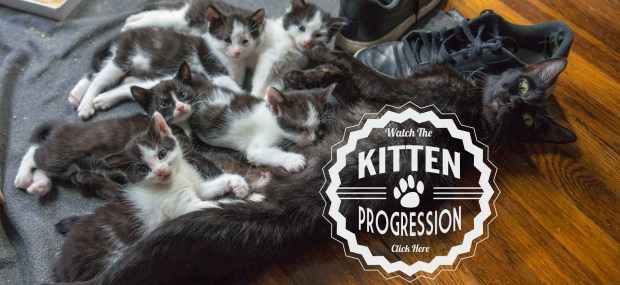 KittenProgression
