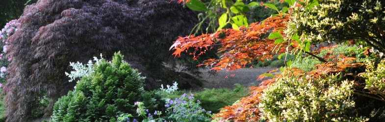 Plants for shade to brighten up your garden