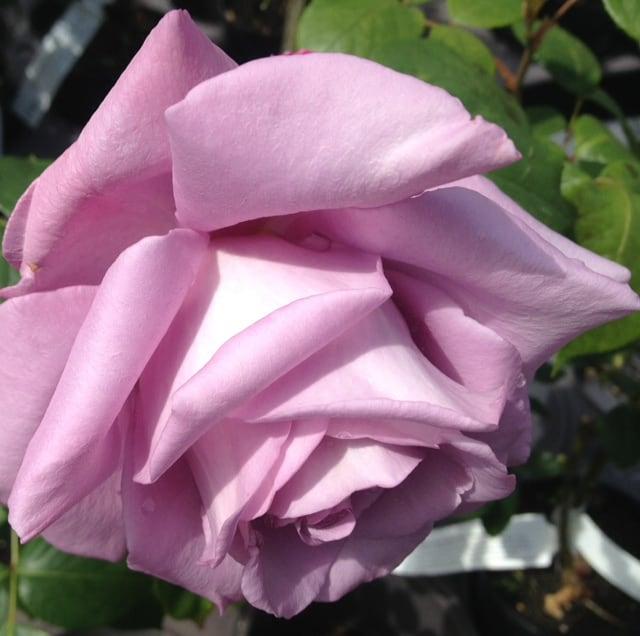 Karson & amp; Kennedy's Top 10 Guerra de las Rosas de 2012 & laquo; Mezcla 104,1