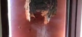 فيديو: رجل يصوّر دبابير بنت عشها على نافذة بيته !