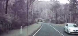 فيديو : سائق ينجو بأعجوبة من سقوط اشجار عملاقة على الشارع