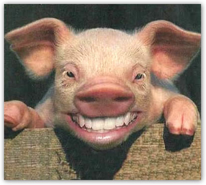 sonrisa cerdo