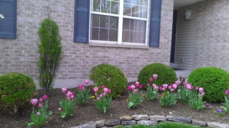 tulip garden, landscape design st louis, curved bed, stone edge