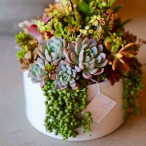 plantas_suculentas