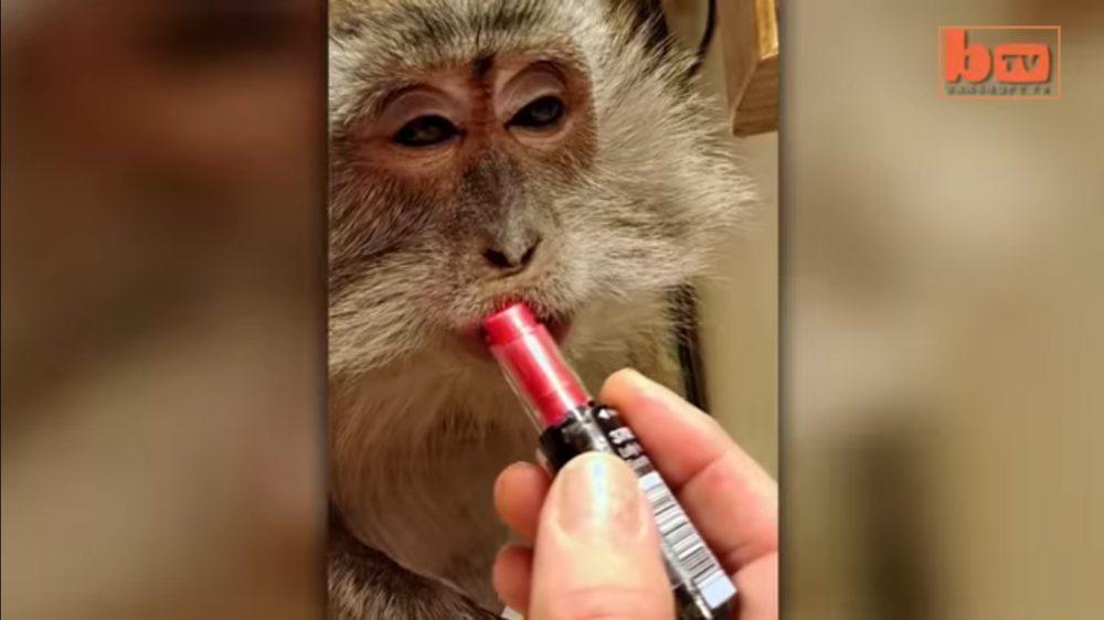 maimuta-machiata-viral