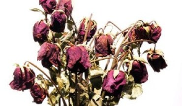 dead flowers 300x200 Use Your Experience To Grow Your Brand
