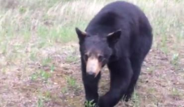 pnjLp0oHjKuk Two Men Encounter a Black Bear during Workout (vid)