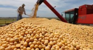 Las Parejas pierde este año un millón setecientos mil pesos por la eliminación del fondo sojero