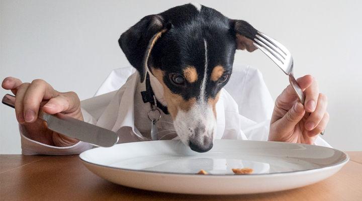 Alimentación de un perro
