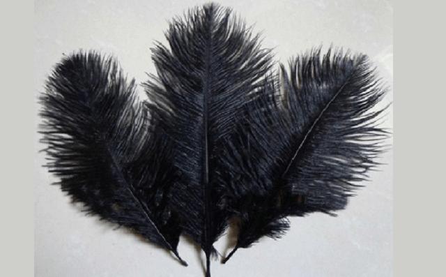 Las plumas del avestruz, en judeoespañol, desde el CIDICSEF de Buenos Aires