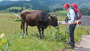 P1130327 2 Vom Notschrei zum Feldberggipfel