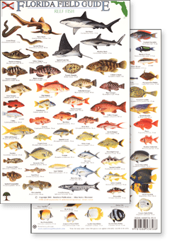 florida reef fish marine field guide.png