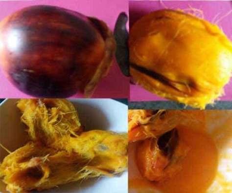 palm-fruit-pancakestape1
