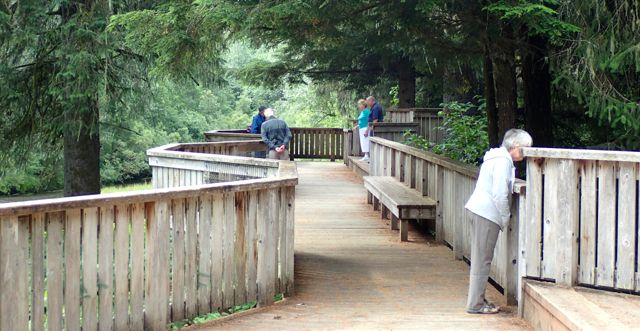 The boardwalk for viewing the bears at the Fish Creek Wildlife Viewing Area.